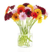 Image result for tiny gerbera bouquets