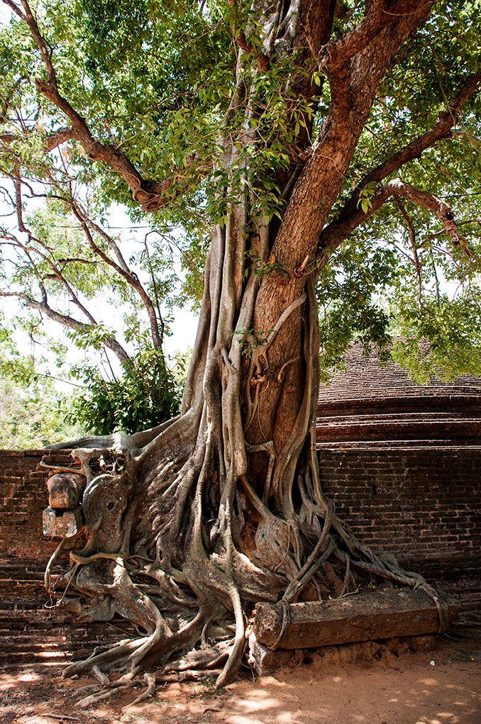 Tree – MrJane