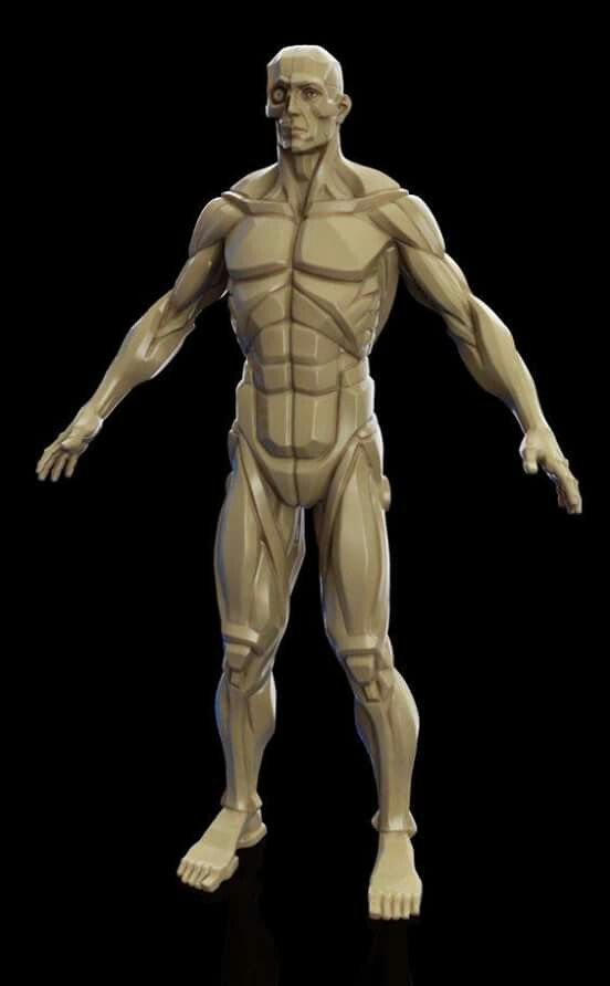 96 best Anatomia para artistas images on Pinterest | Anatomía humana ...