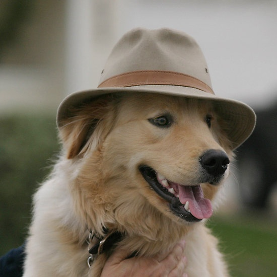 Revisit Goldens in costumes, cute | {GROUP} Golden ...