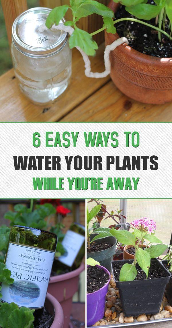 6 Facons Simples D Arroser Vos Plantes Lorsque Vous Etes Absent