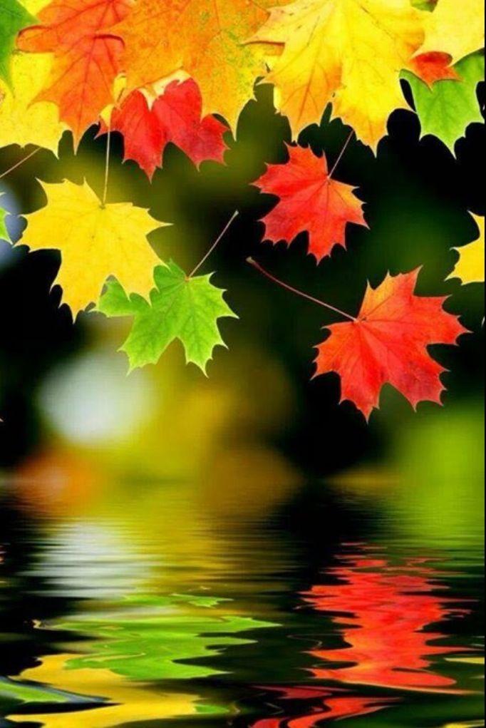 Fall....into autumn. Sigh.