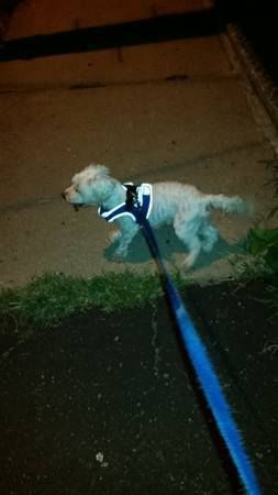 1000+ images about Found Dogs NJ on Pinterest | Poodles ...