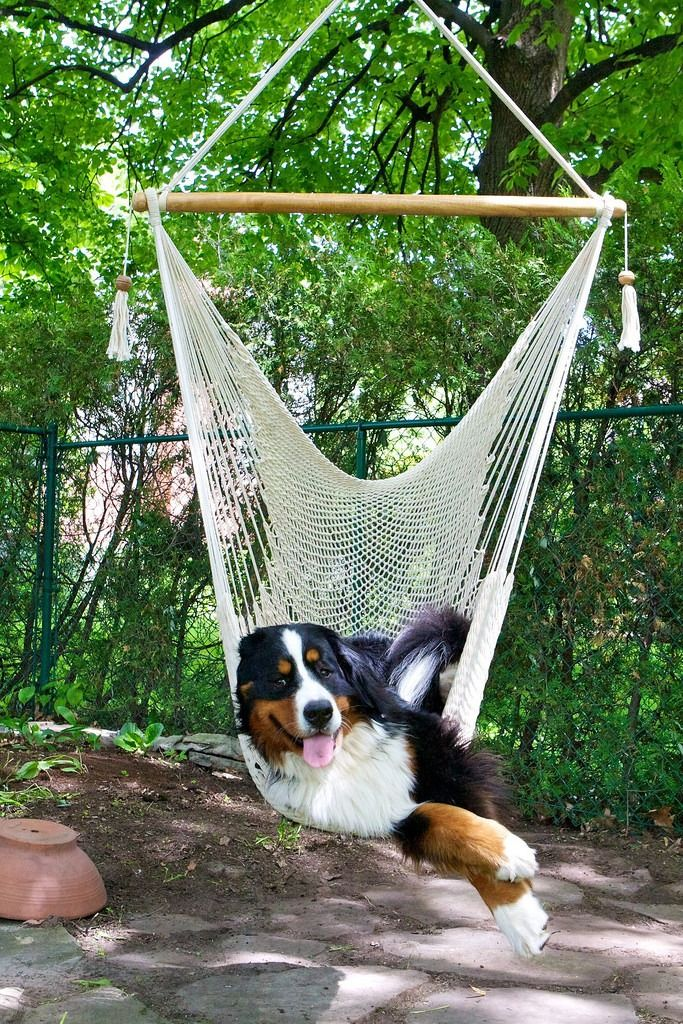 I have to get up really early to beat Charlie to the Hammock..........