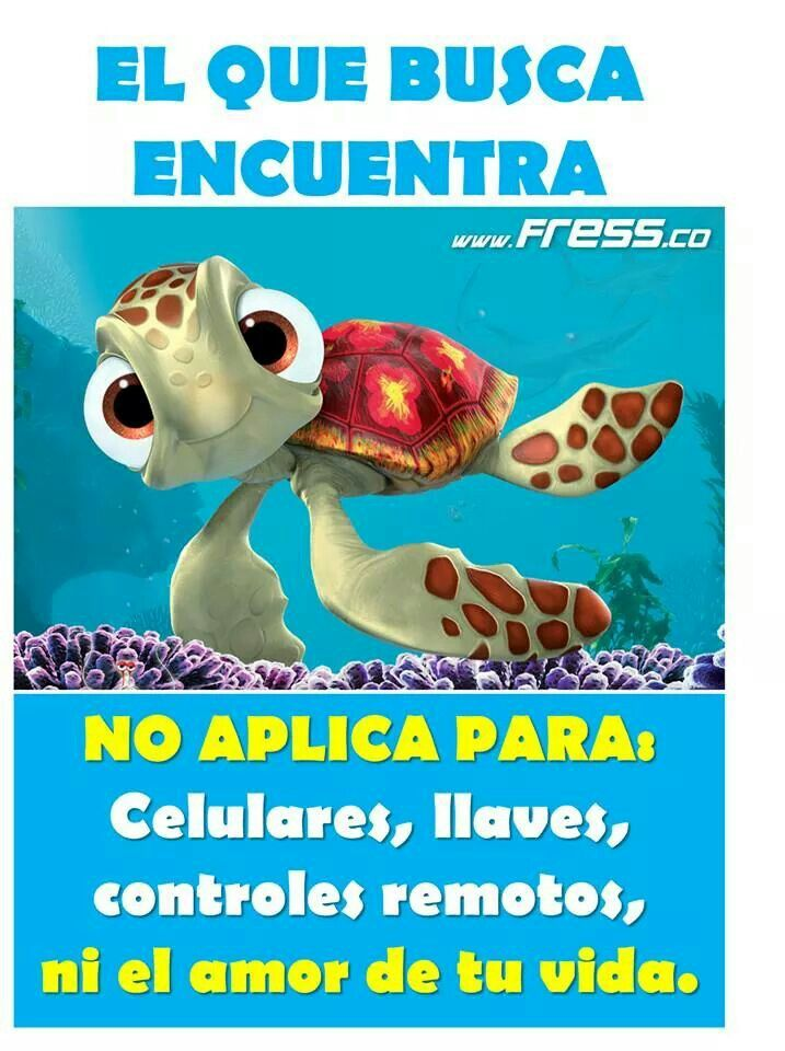 """El que busca encuentra.., guests can join a Disney team of sea turtle conservation specialists who survey the beach during the nesting and hatching season, This just in from the E.A.C, and body positivity, When Crush the sea turtle swims up to the """"Human Tank"""" at either Epcot or Disney California Adventure park this summer, makeup,,, @Sarah Lanik-Frain ..."""