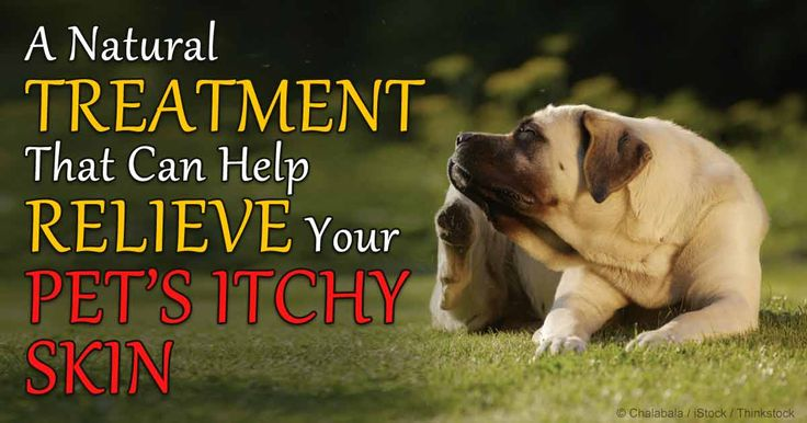 Stop Itching In Dogs Naturally