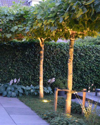 Moderne tuin in Elst