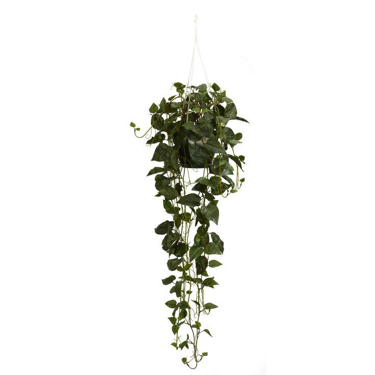 Plante retombante home philodendron hanging basket for Plantes interieur tombantes