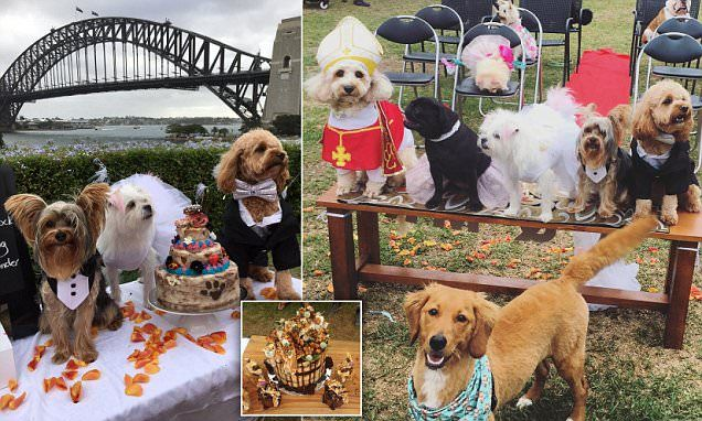 Dogs dressed to the (ca)nines say 'I do' at a Sydney pet wedding