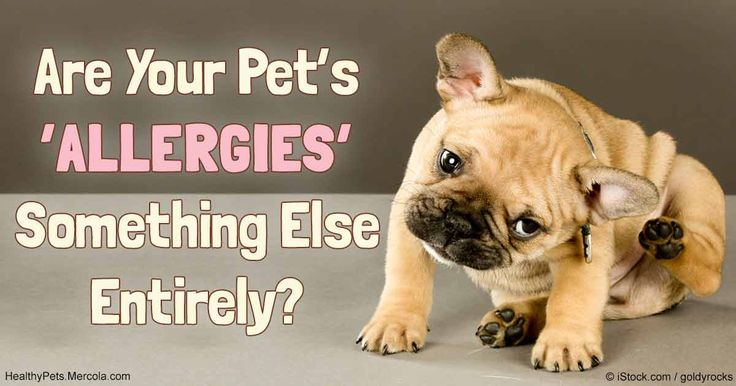 If your pet suffers with a rash or itchy skin or ears, or shows the signs of irritable bowel syndrome, food sensitivities or intolerances may be to blame. http://healthypets.mercola.com/sites/healthypets/archive/2017/01/02/dog-food-allergies.aspx