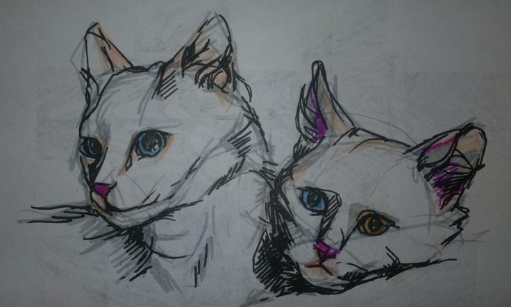 Kitty sketchings...