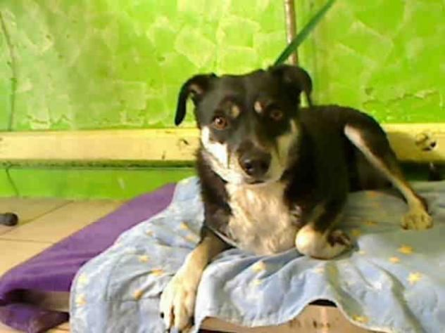 NEMO - located at L.A. COUNTY ANIMAL CARE CONTROL: CARSON SHELTER in Gardena, CA - Adult Neutered Male Terrier/Lab Retriever Mix