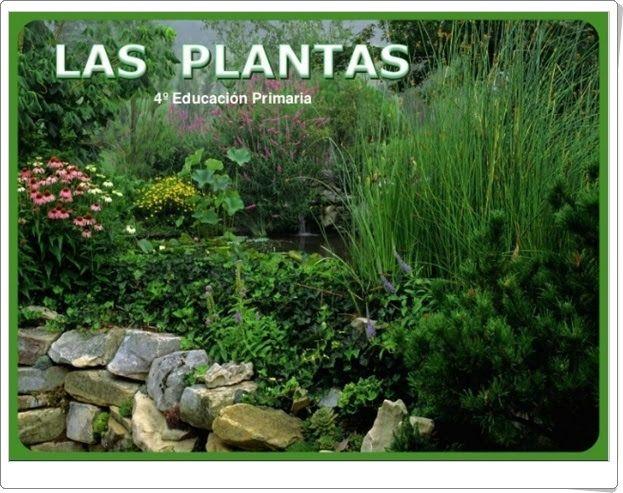 Las plantas (Presentación de slideshare.net/miclaseenlanube)