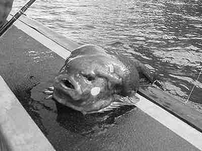 Fishing in Hawk's Lake near Clarkson, Minnesota in 1971, Jim Hughes, 16, landed what he thought was a 'really big, ugly fish.' He dropped it after unhooking it when it said, 'Hurts! Hurts!' in a clear, deep voice. It then slid back into the lake. Pic taken by his brother, Bill Hughes, 19, who said he heard it too.  Both claimed it had 'man-like hands with fingers—and blue eyes.'  It scared the 'holy crap' out of them.