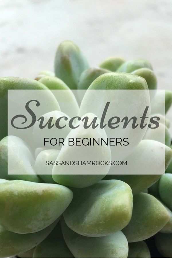 Succulents For Beginners :http://www.sassandshamrocks.com/succulents-for-beginners/