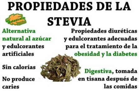 95 Best images about Stevia, beneficios y recetas on