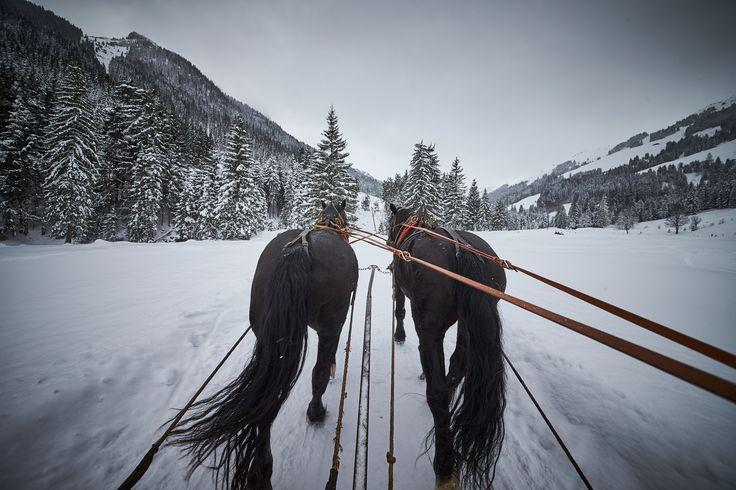 Fast so schön wie im Märchen! PFERDESCHLITTENFAHRT ZUM BAUMZIPFELWEG in Saalbach Hinterglemm im Skigebiet Skicircus #winterwonderland #pferdekutsche #skiurlaub #reisen #travel #winter