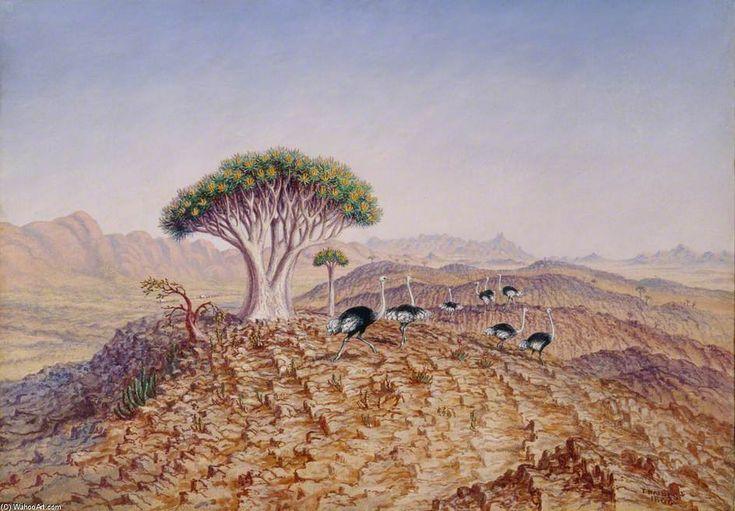 The Great Tree-aloe du Damaraland de Thomas Baines (1820-1875, United Kingdom)