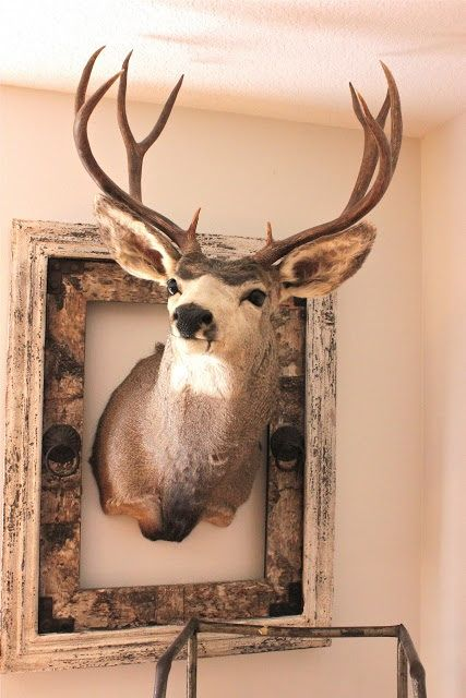 What to do with the deer?! not have it hang in the living room :/