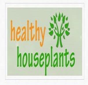 HEALTHY HOUSEPLANTS - - This site is specific to creating a spectacular indoor garden. Indoor house plants encyclopedia, plant care tips & tricks, blog and video library. On the main page is the plant of the month. Plant section has only minimal information, but her blogs are wonderful. Julie Bawden-Davis