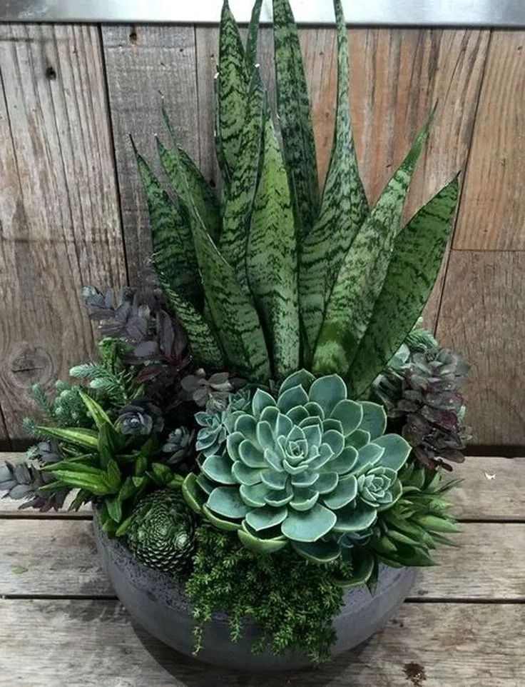 24 beauty cactus and succulent garden ideas for indoor 17
