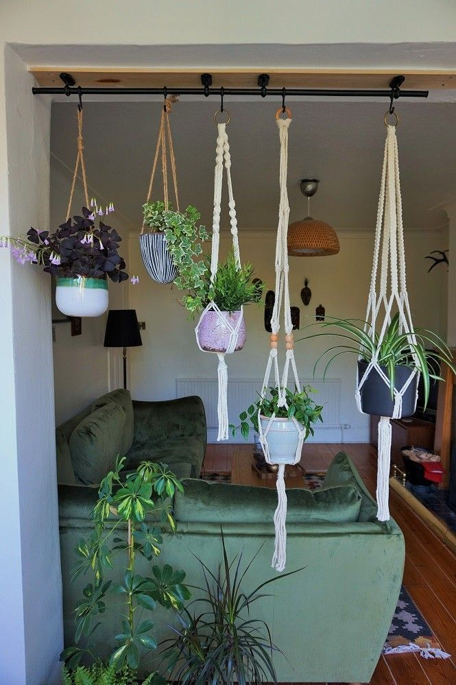 Wie man Pflanzen von der Decke hängt Oxalis trian…