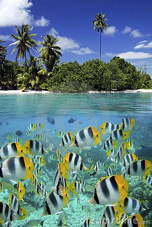Coral Reef - Tahiti - French Polynesia by Steve Allen, via Dreamstime