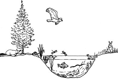 What are Ecosystem Populations? Organizational Levels