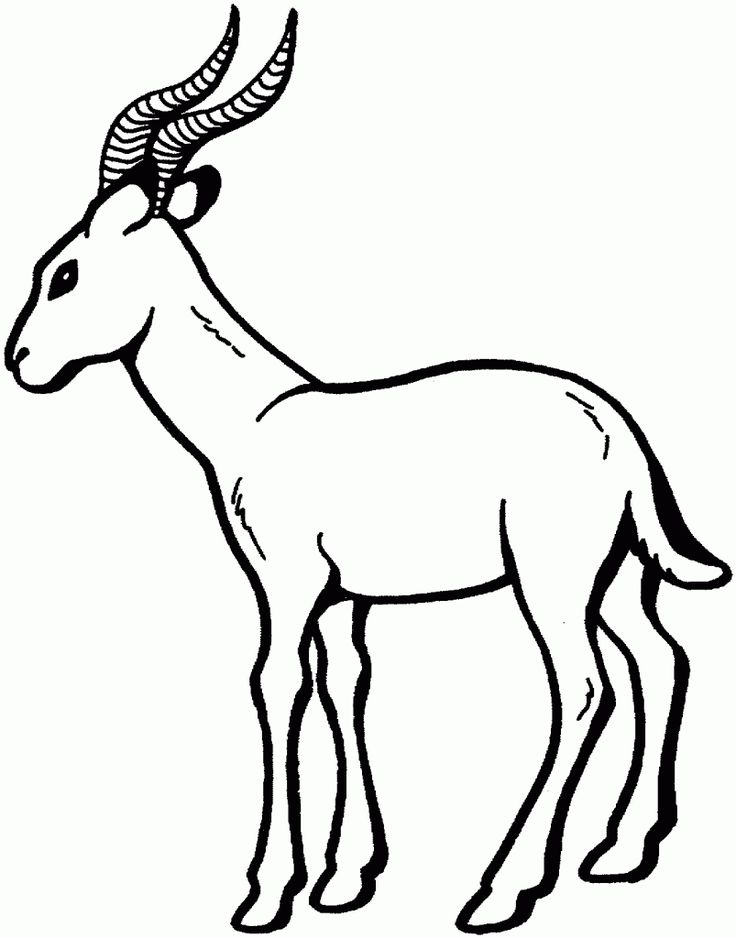 16 best Gazelle Coloring Pages images on Pinterest Homework Pre