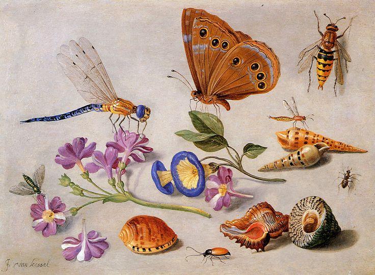 Beautiful insect paintings by Jan van Kessel (1626-1679)