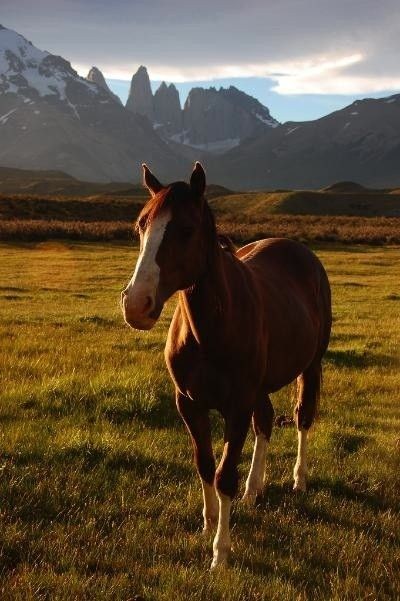 Horseback riding in Torres del Paine, Chile
