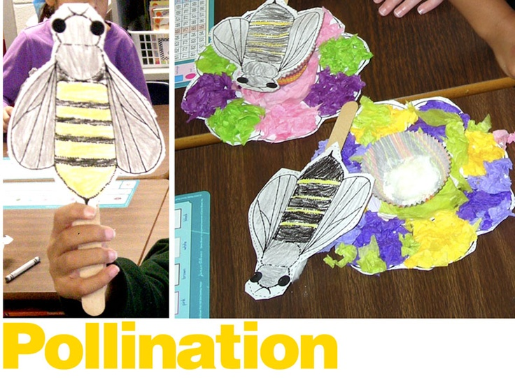 cute pollination craft: Crafts Ideas, Botany Class, Theme Classroom, Kids Crafts, Homeschool Science, April Activities, Bees Theme, Art Activities, Classroom Ideas