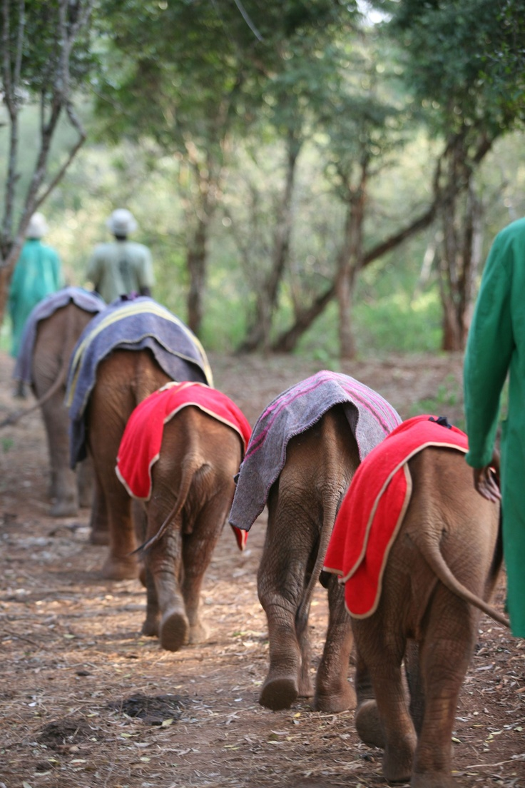 One of our favourite pictures is of all the orphans in their brightly coloured blankets traipsing home after a day out in the park.
