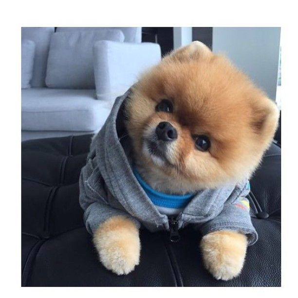 Bentley Club Azerbaijan Bentleyclubbaku On Instagram: Wear Clothes #cute #animals #cuteanimals