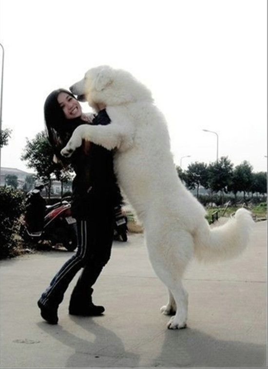 Wonder if our puppy will be this big? He probably will! Too cute!