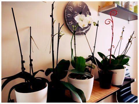 Как правильно ухаживать за орхидеями. Полезные советы! - YouTube