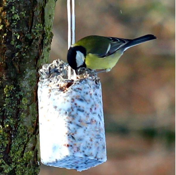 Rindertalg mit Vogelfutter als Kolben zur Winterfütterung