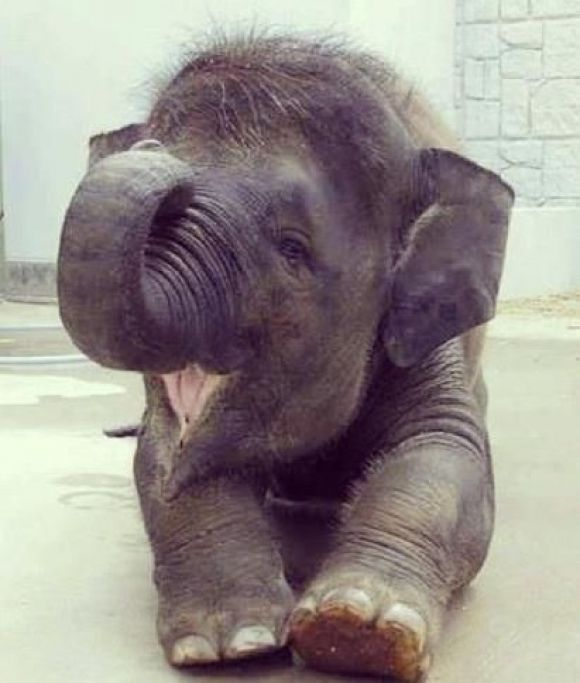 a smiling baby elephant!!