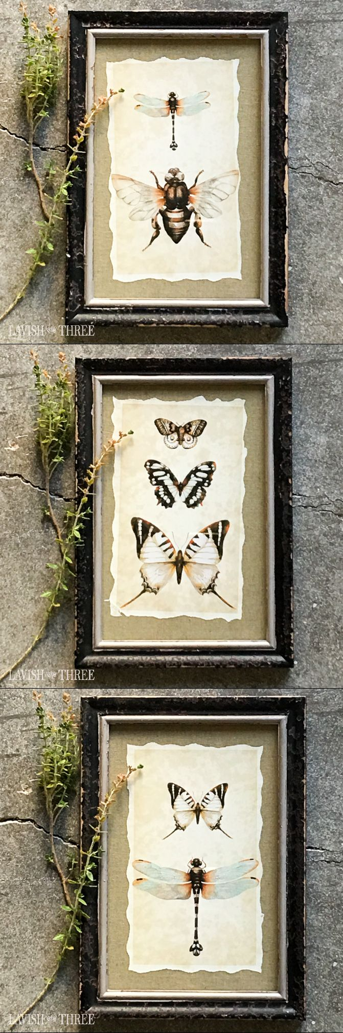 Vintage inspired framed insect prints. Available in Bumblebee Beauty, Muted Moths, Soft Black Butterfly or Delicate Dragonfly. Perfect wall art for the office, bedroom or living room.