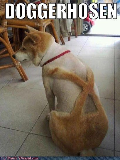 Tailor made.: Animals, Dogs, Pet, Poor Dog, Funny Stuff, Humor, Haircut, Things