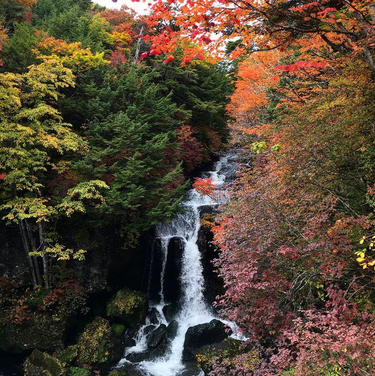 今年の旅を振り返る編。。。10/10 今年最初の紅葉🍁は、奥日光竜頭ノ滝から。。。🍁✨ 奥日光はかなり早く紅葉するので、毎年中々機会がないのですが、今年はタイミングが合いました🍁✨ そんなに歩くことなく絶景の出会うことができます✨🍁 残念なのは。。。この日。。。家を出て5分でスピード違反で捕まったことですかね。。。残り1点なり。。。余計なことも一緒に思い出したな。。。 . 2017/10/10 . #栃木県 #日光市 #奥日光 #竜頭ノ滝 #紅葉 #紅葉狩り #紅葉散策 #男体山 #2017 #今年の旅を振り返る編