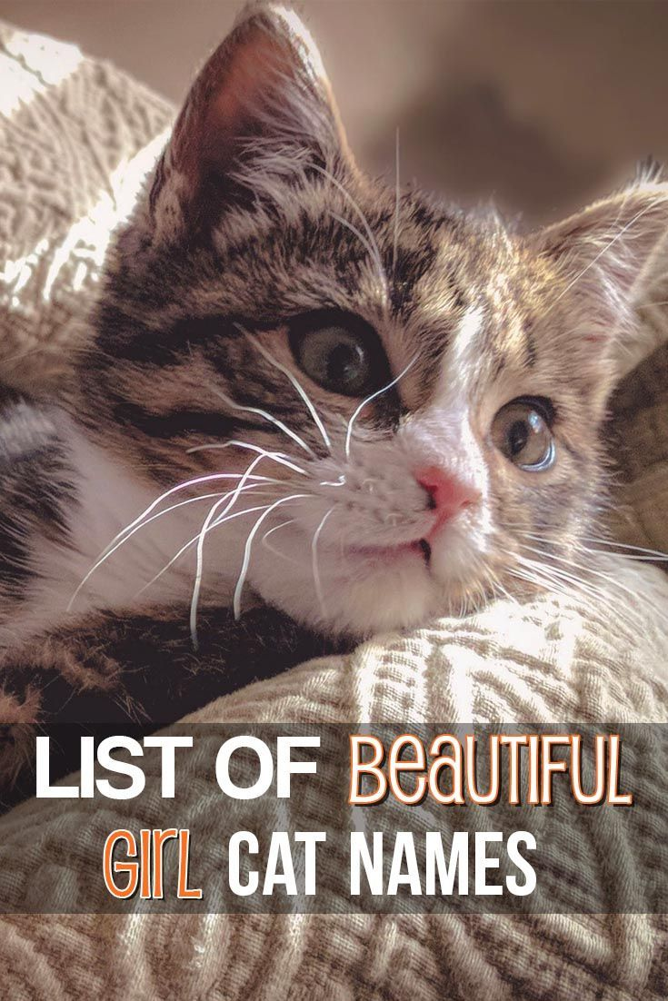 Huge list of girl cat names for your new kitty!