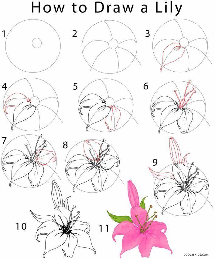 So zeichnen Sie eine Lily Step-by-Step-Anleitung zum Zeichnen mit Bildern.