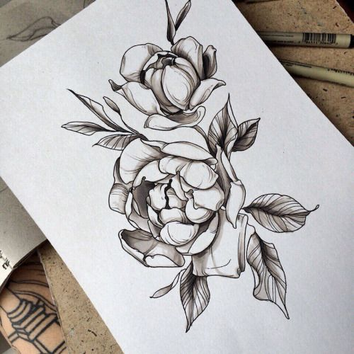 Peony Line Drawing Tattoo : Peony sketch by family ink tattoo pinterest