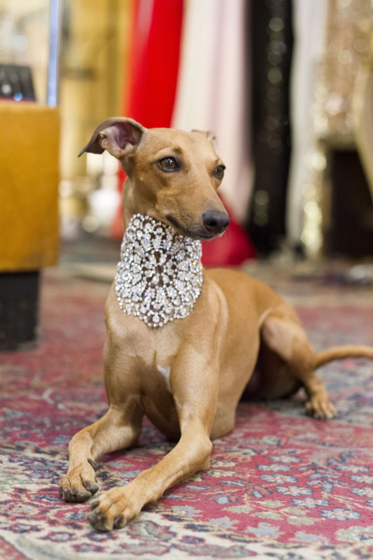 There is no such thing, as too much bling!