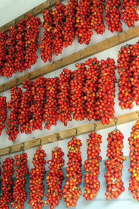 Canning Tomatoes in Italy and a Homemade Pasta Sauce Recipe