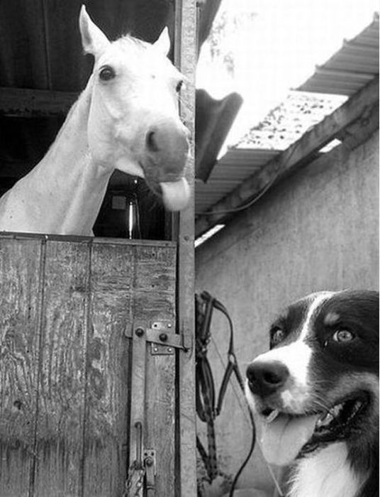 Best Animal Photobombs Images On Pinterest Best Photo Cool - 35 hilarious animal photobombs ever