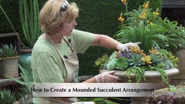 Make a Mounded Succulent Arrangement with Echeverias (Debra Lee Baldwin ...