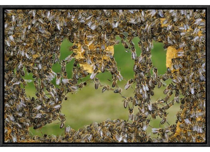 'Honey Bee Chains Made to Repair Framed