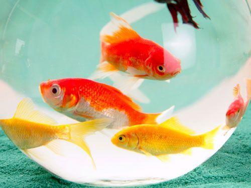 Más vida para tu pez